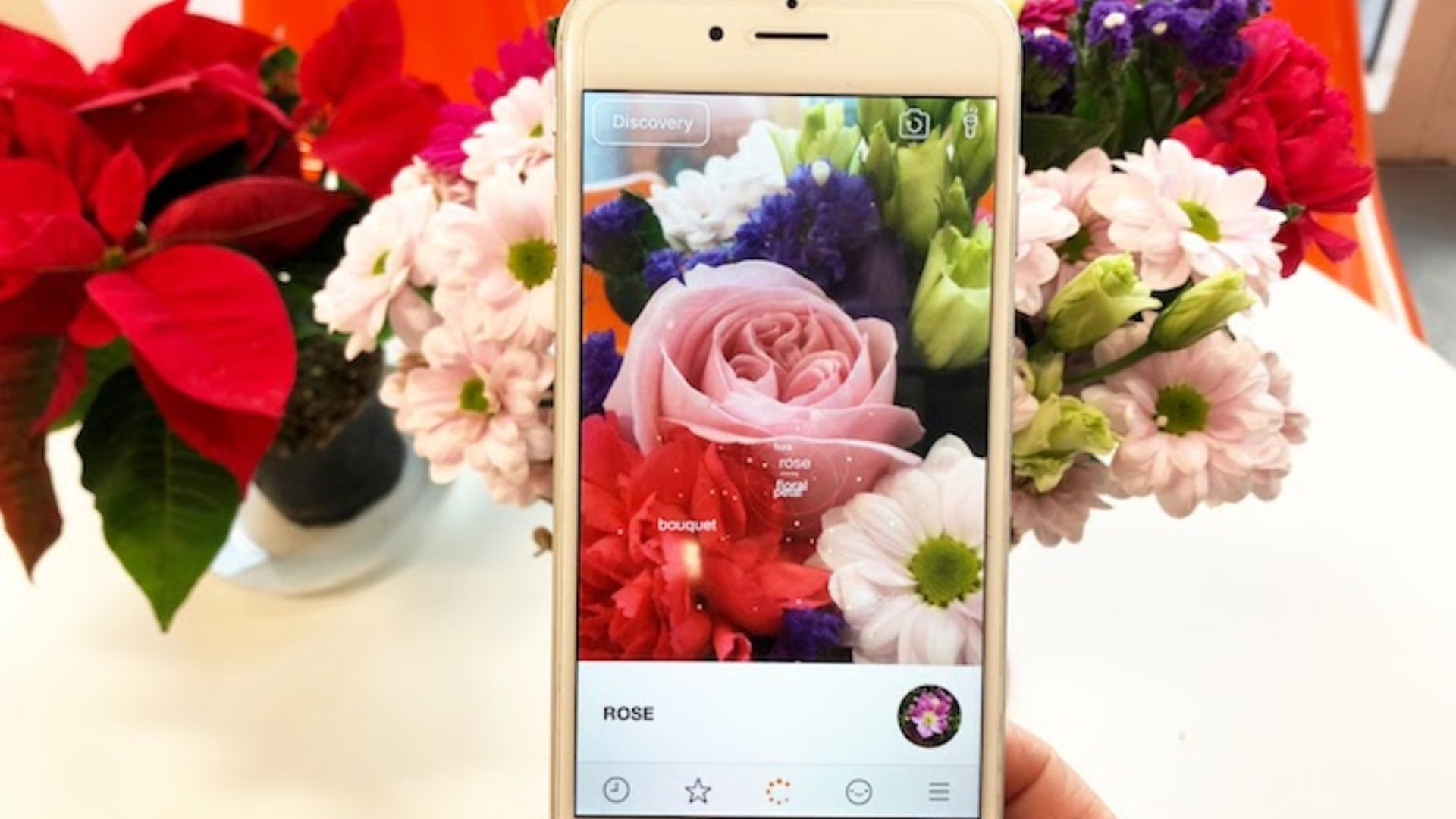 New flower recognition api be your own botanist blog blippar if youve ever struggled to identify a flower or plant weve got the answer were excited to announce our new improved flower recognition technology izmirmasajfo